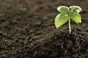 健康的土壤重要的性探讨