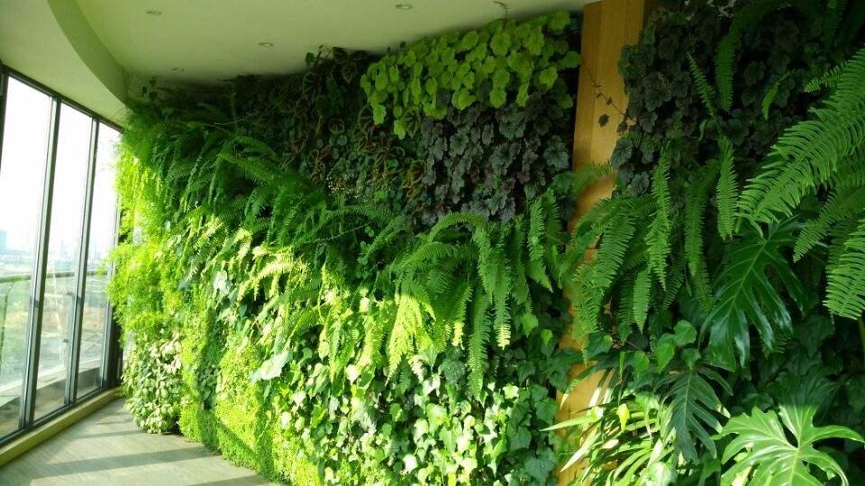 冬天室内植物护理