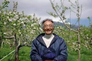这个日本老人15年疯子般的坚持|种出了2年都不会烂的苹果