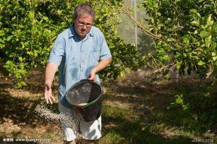 有机肥料和化学合成肥料之间的区别?