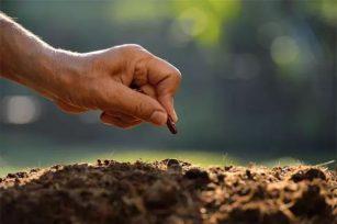 成都绿康有机肥|金山银山或者绿色青山