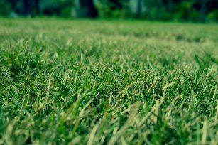 绿康有机肥(K)对草坪的作用!
