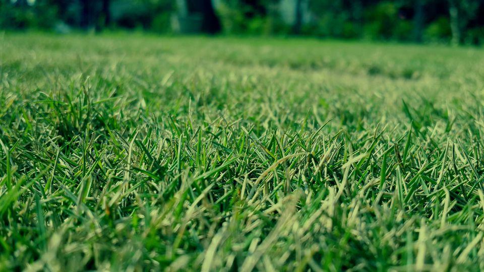 绿康有机肥(K)对草坪的作用