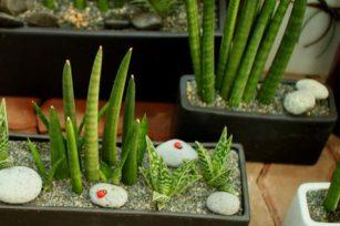 改变室内空气质量的三种普通植物