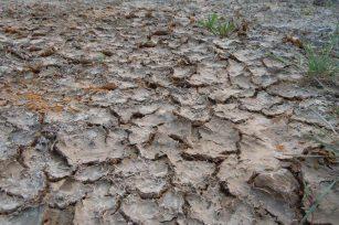 土壤盐害危害大,解决办法看这里