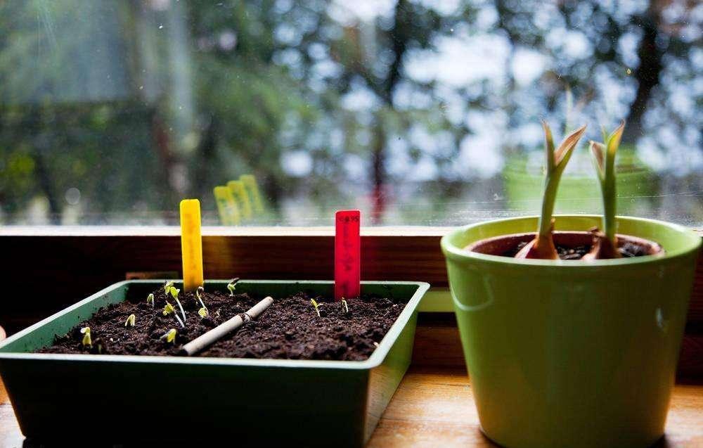 室内育苗播种