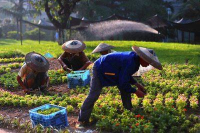 什么是作物的轮替种植,作物轮替的种植最佳实践是什么?