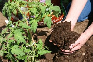 这几种肥料,你选择对了吗?