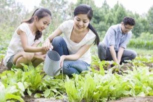 园丁日记|这个周末去哪?了解有机农场的正确定义!