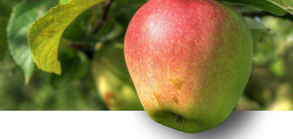 果树有机肥