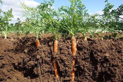 如何判断土壤是肥是瘦呢,土壤鉴定指南