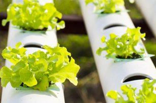 无土栽培 – 什么是优质培养基?