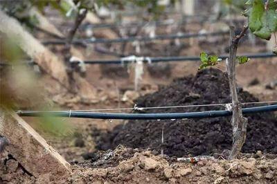 生物菌肥执行标准是什么,有什么作用?