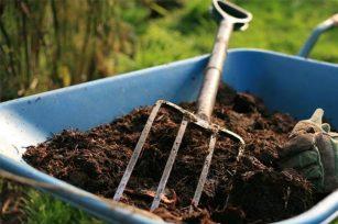 为什么有些施用了有机肥,出现了死株现象?