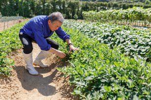 用化肥,农家肥,有机肥,如何正确使用?