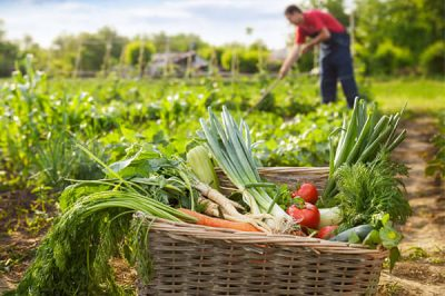 化肥和有机肥可以混合着用吗?