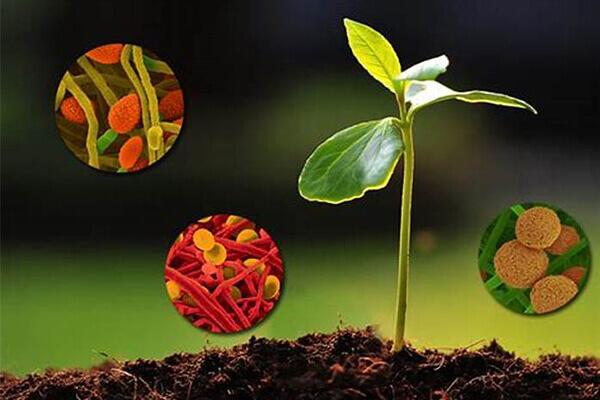生物菌剂_微生物菌肥_有机肥